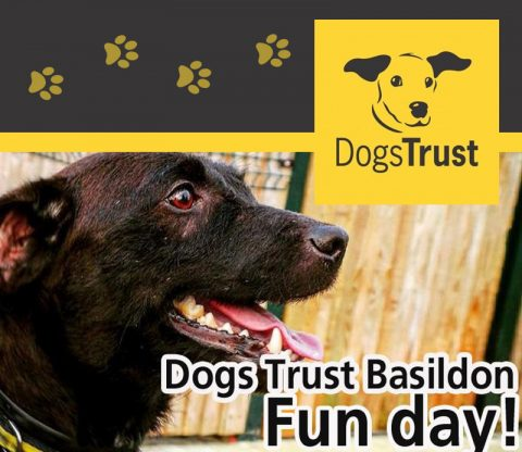 All Ears for Four Legged Fun Day! featured image