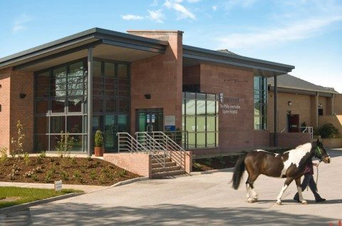 University of Liverpool Equine Centre featured image